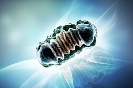Mitochondrien Therapie